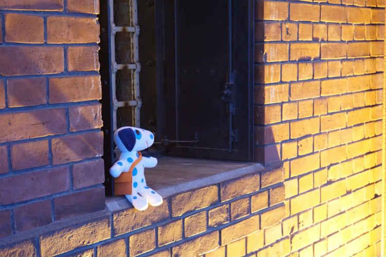 窓際に座るブルーダル