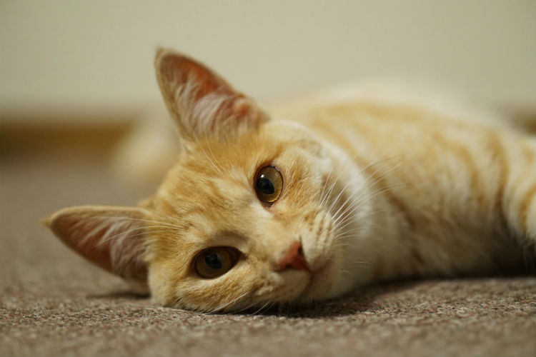 猫も可愛く撮影