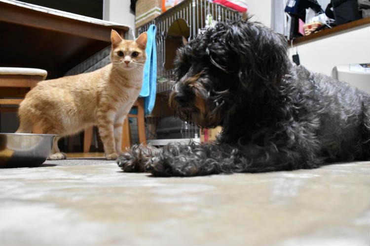 犬と猫をローアングルから撮影