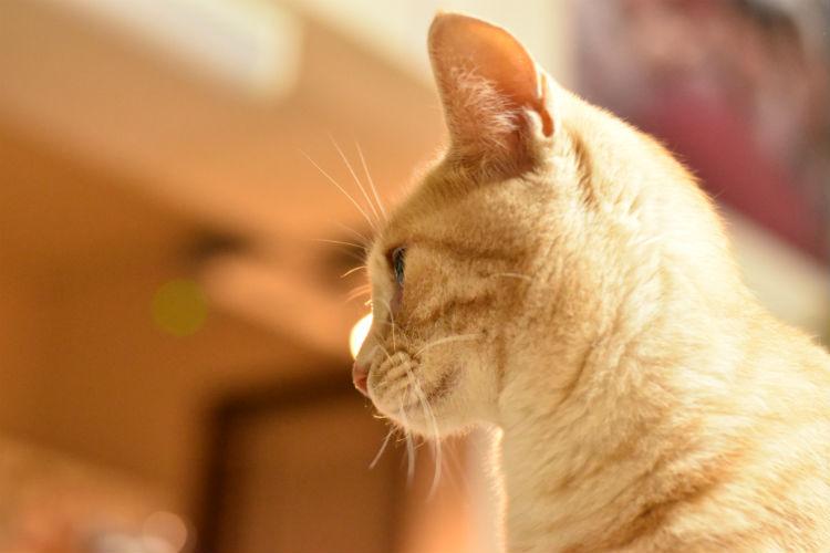 f2.8の猫写真