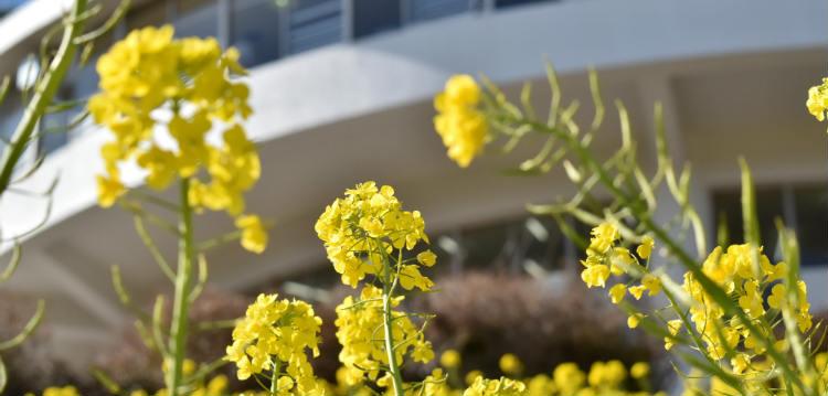 いすみ鉄道と菜の花を撮影してみたいな