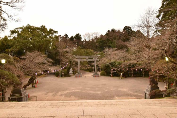 香取神宮の桜はもう少しでしょう