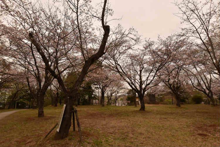 曇りの日の桜は空を入れないほうが良い
