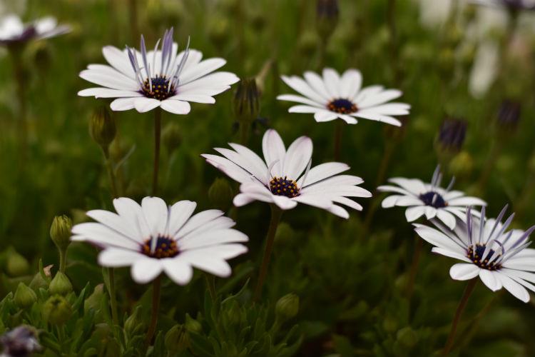スポット測光で中央の花を撮影