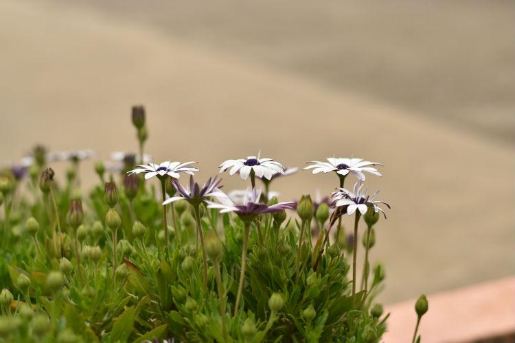中央重点測光モードで花を撮影