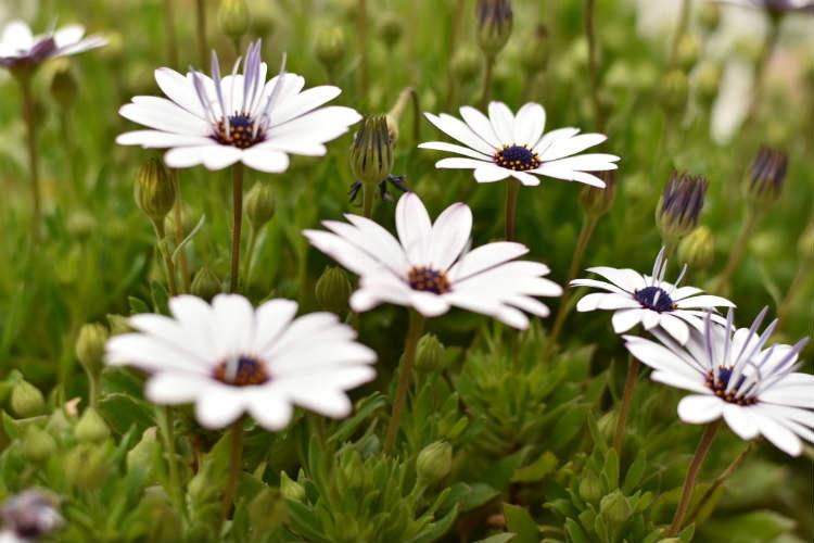 スポット測光で中央の花の上の蕾を撮影