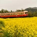 小湊鉄道の電車にピントが合って良かった
