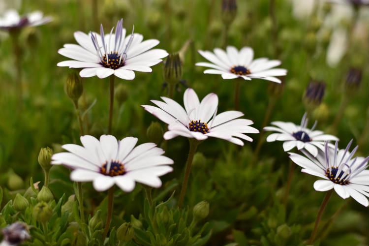 中央重点測光で中央の花を撮影