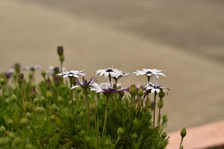 スポット測光モードで花を撮影