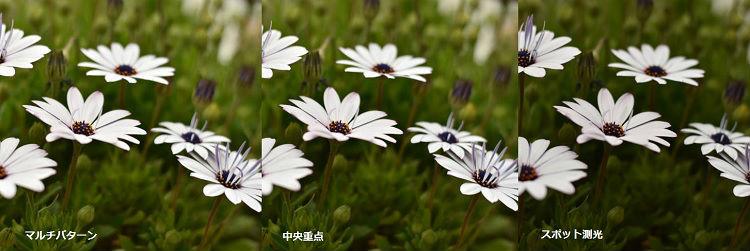 中央の花で3種類の測光モードの実験中