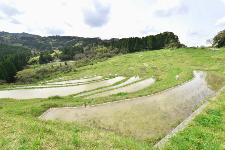 眼下に広がる大山千枚田の棚田が凄い景色だ