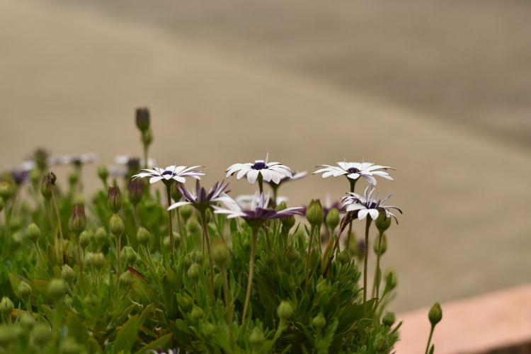 マルチパターン測光モードで花を撮影