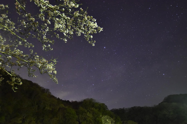 桜と天の川だろう星写真になりました