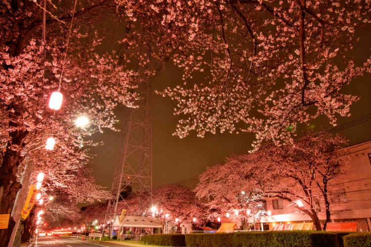 曇りの日の桜は撮影時間を変える
