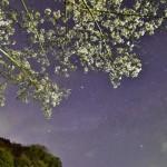 散り始めた房総三島湖の夜桜と星空