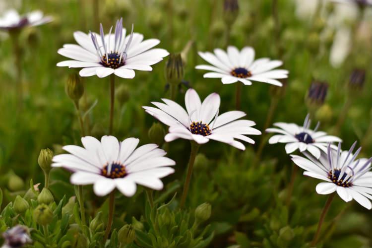 マルチパターン測光で中央の花で撮影