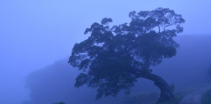 印西市の榎の木はドラマロケ地