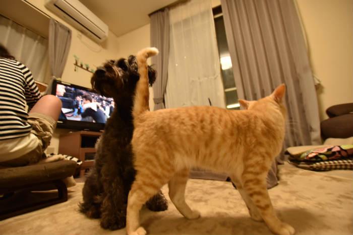 手前の猫が大きく写るのも広角レンズの特徴