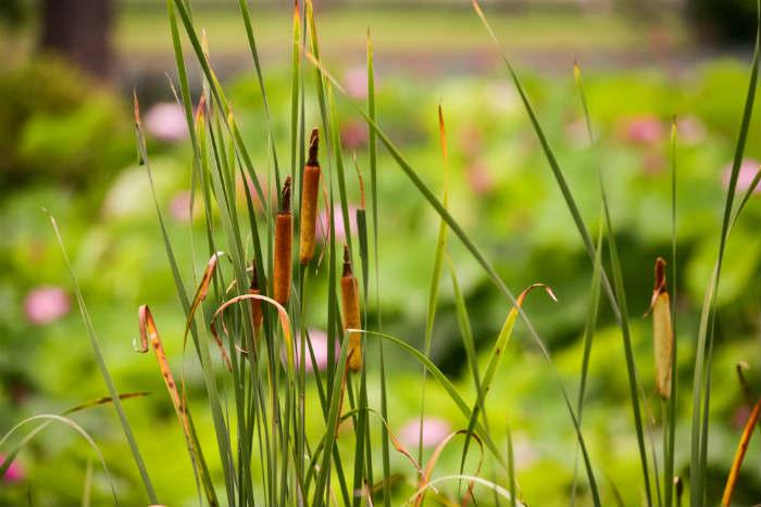 おもしろい植物