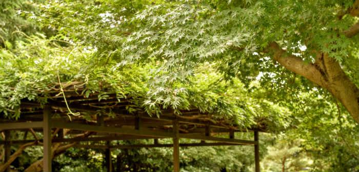 藤棚と紅葉