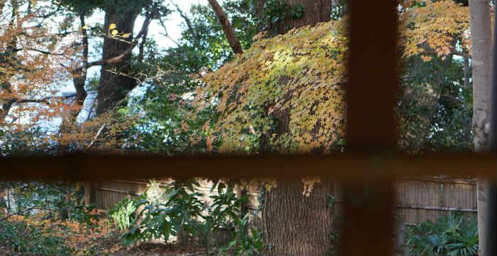 戸定が丘歴史公園の紅葉