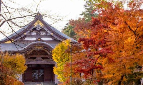 牡丹のお寺観音寺の紅葉