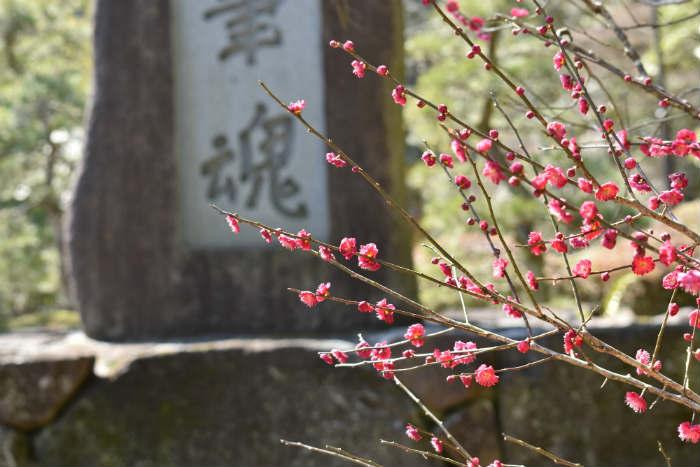成田山で梅