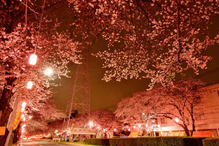 4月は桜だけど夜桜