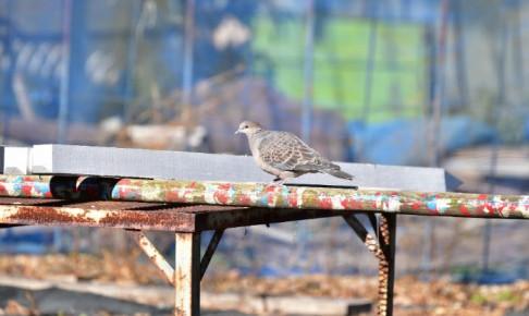 はじめての野鳥撮影
