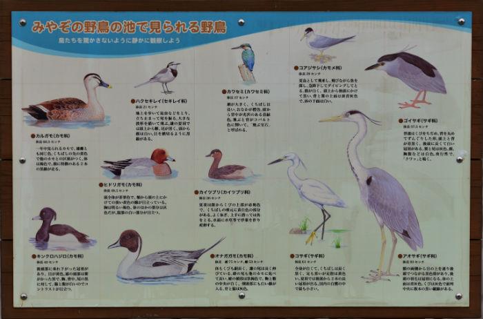 みやぞの野鳥の池の鳥
