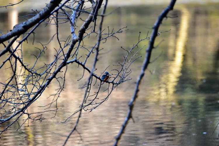 鳥が小さく写る