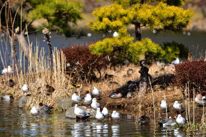 池の中央の島にも鳥が沢山いる