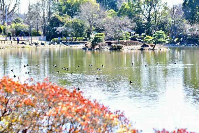 中央に池のあるじゅん菜池