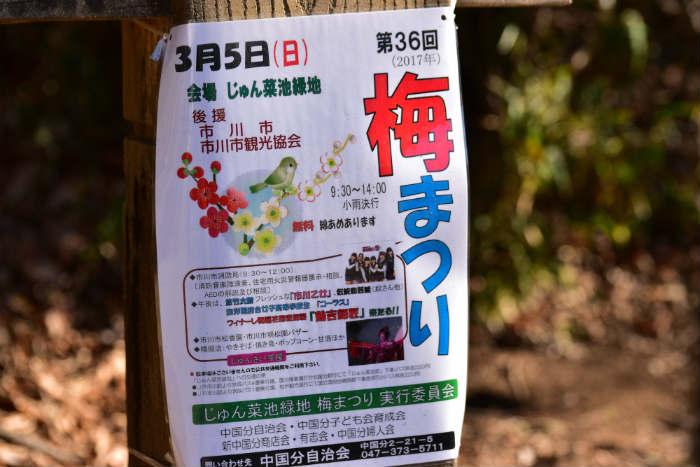 じゅん菜池の梅まつり