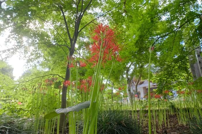 観音寺の花壇