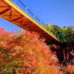 泉自然公園の紅葉といずみ橋