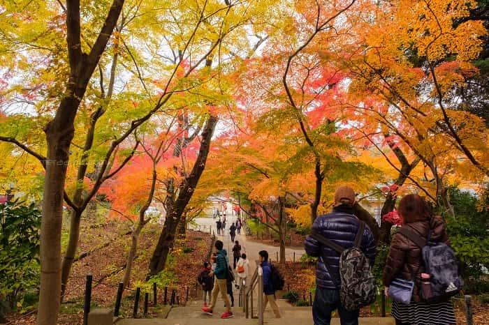 松戸市本土寺の門をくぐると別世界の紅葉