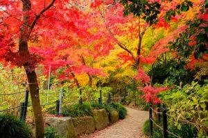 松戸市本土寺の小道の紅葉