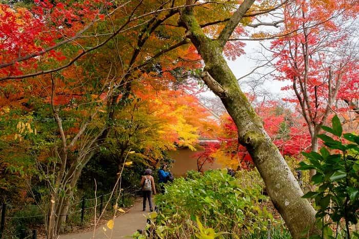 松戸市本土寺のトイレ前の紅葉