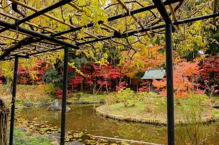 本土寺の池の紅葉