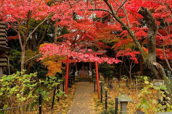松戸市本土寺の小さい鳥居と紅葉