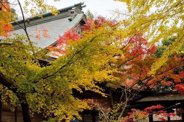 緑が多い本土寺の紅葉