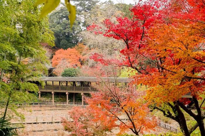 本土寺の菖蒲の池の紅葉