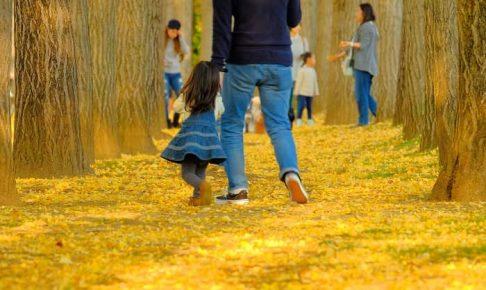 つくば万博記念公園の銀杏並木