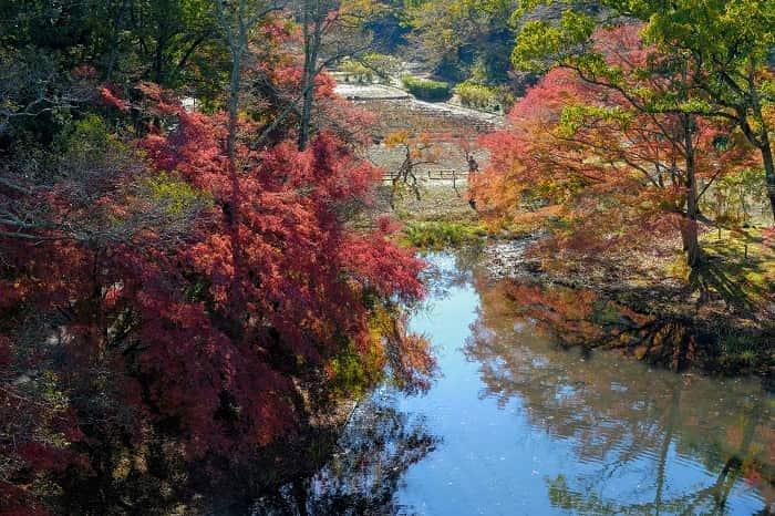 泉自然公園のモミジを橋から