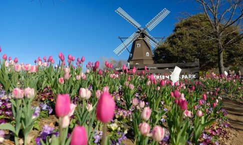 船橋アンデルセン公園の風車とチューリップ