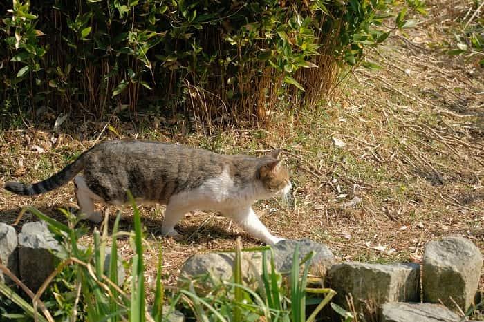 市川じゅん菜池の猫