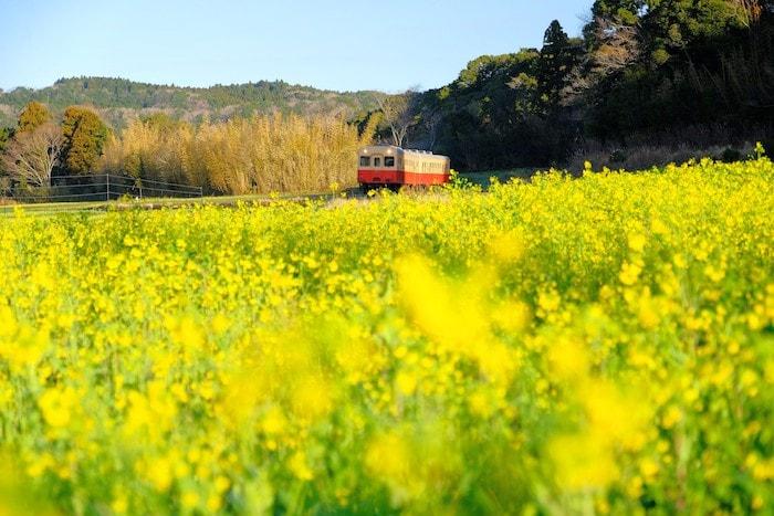 石神の菜の花と小湊鉄道2