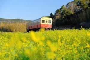 石神の菜の花と小湊鉄道3