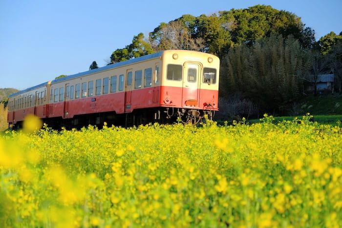 石神の菜の花と小湊鉄道4